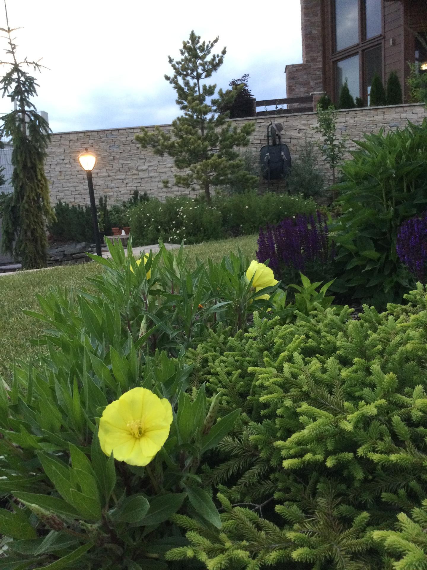 Záhrada po 2 rokoch ... - Obrázok č. 26