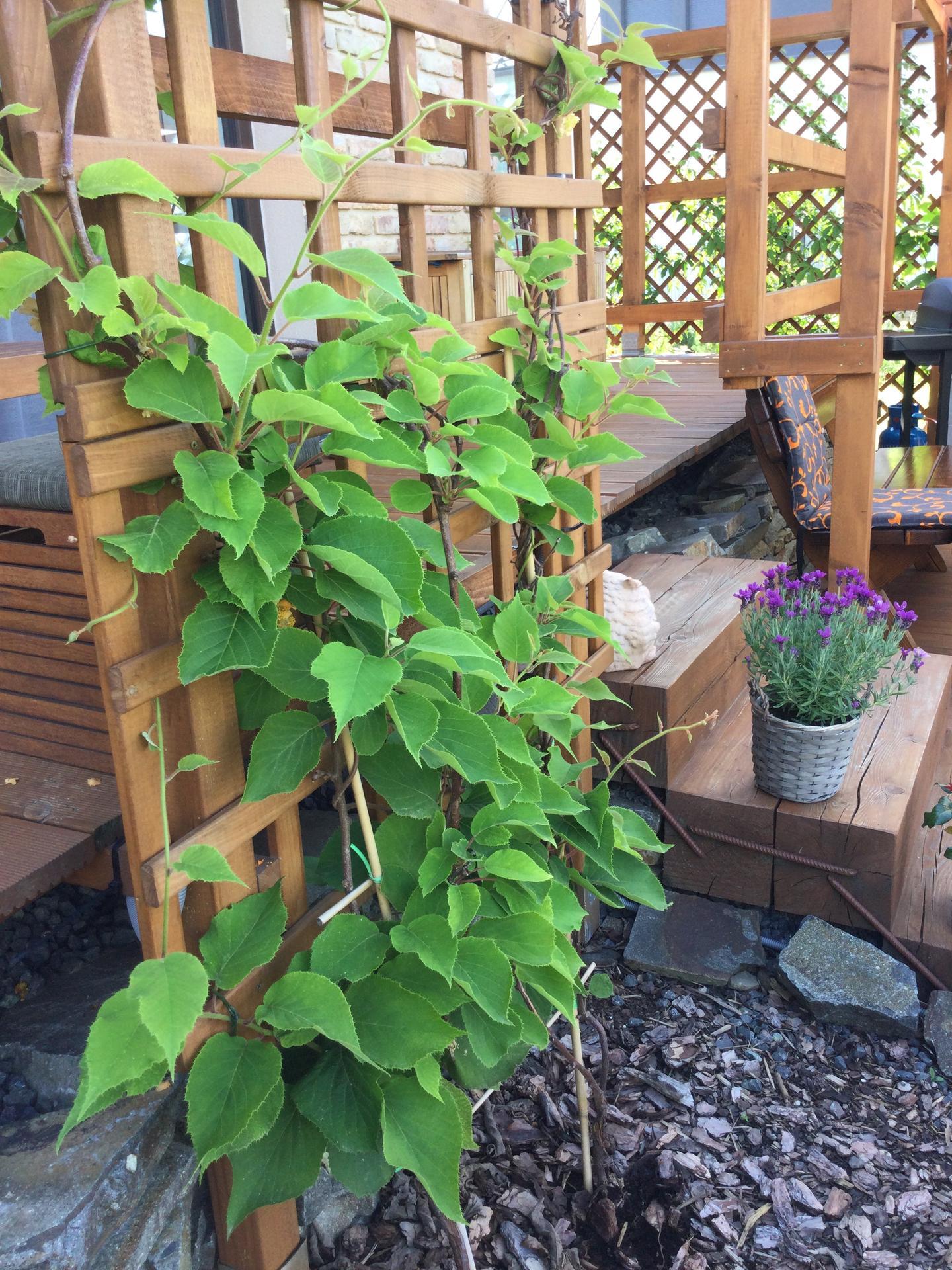 Záhrada po 2 rokoch ... - Obrázok č. 12