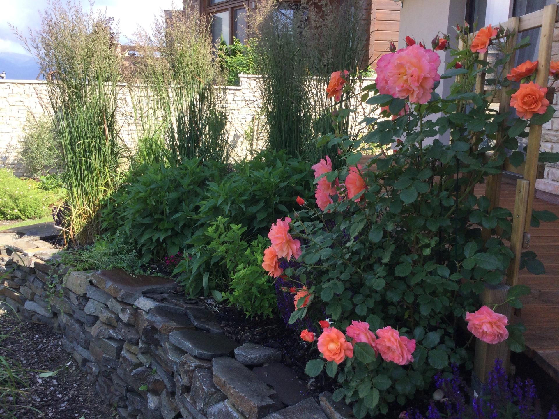 Záhrada po 2 rokoch ... - Obrázok č. 13