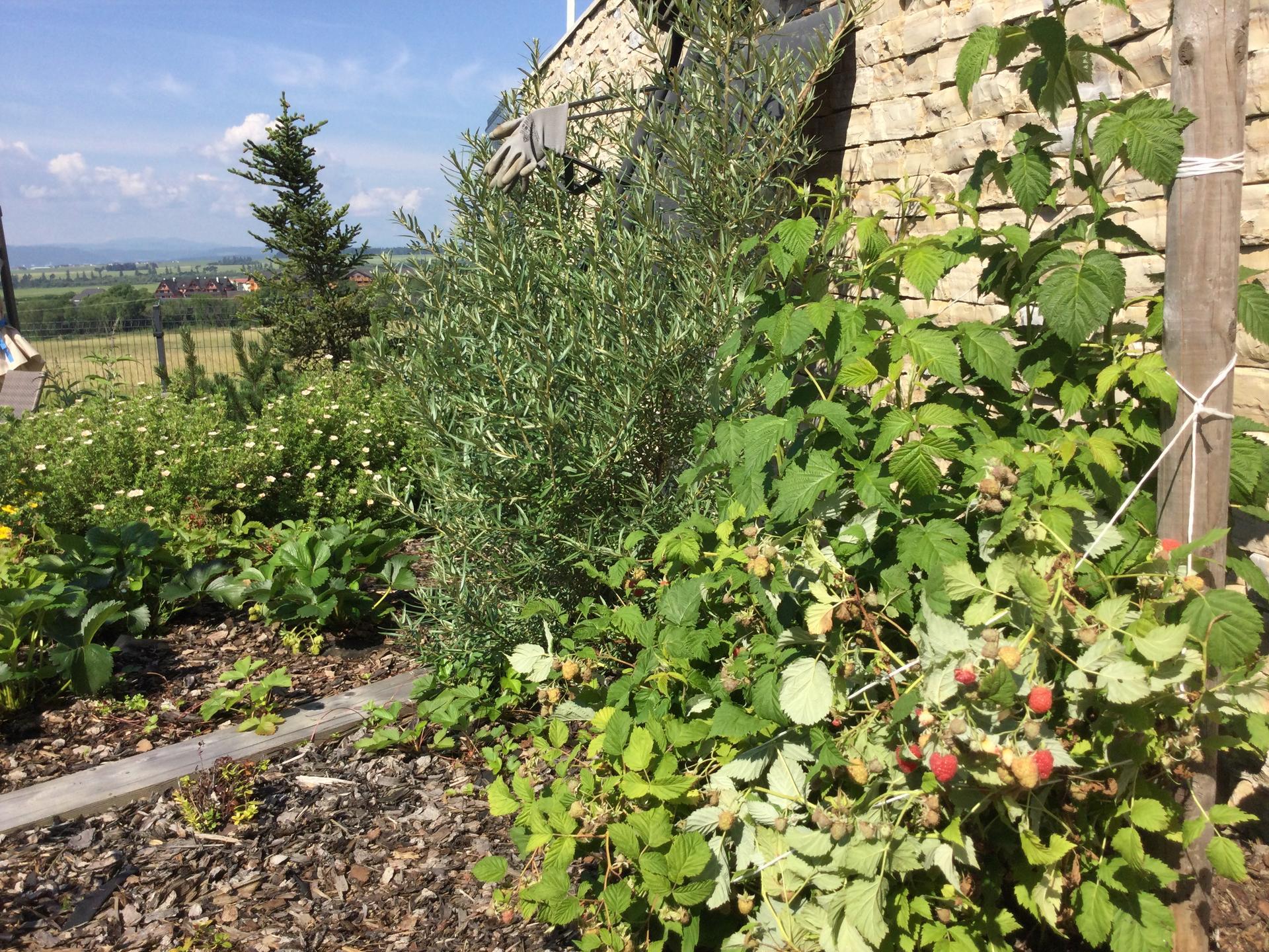 Záhrada po 2 rokoch ... - Obrázok č. 15