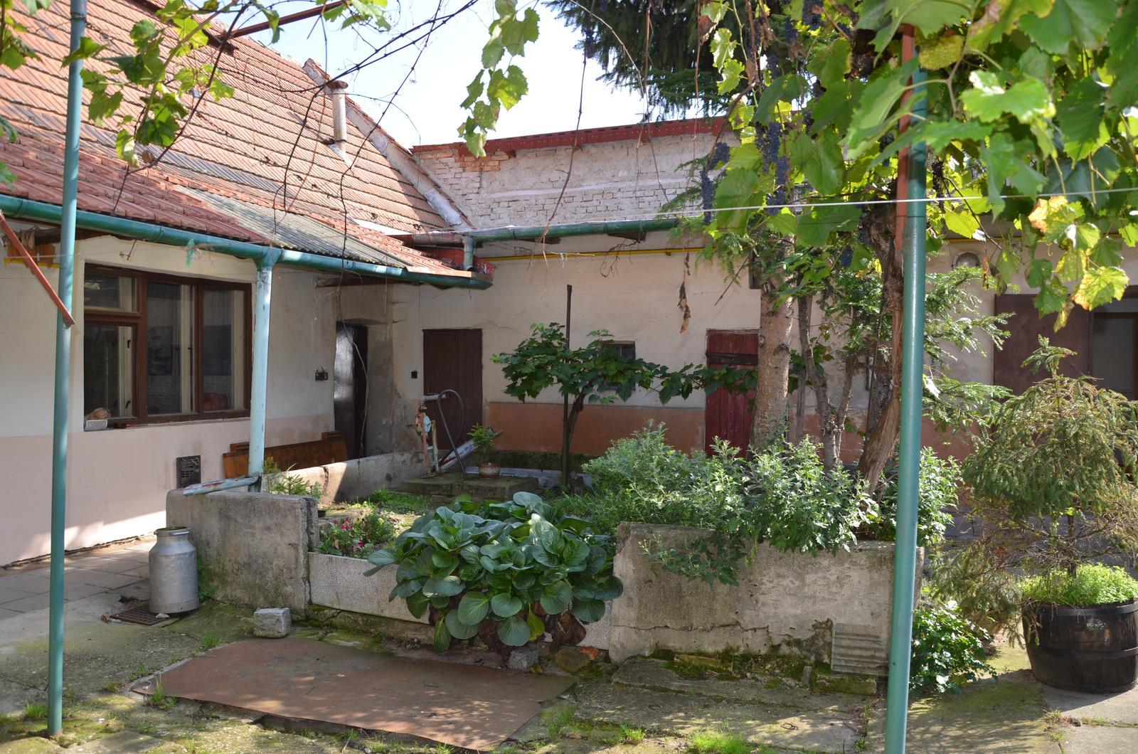 Vysněná zahrada... - Obrázek č. 2