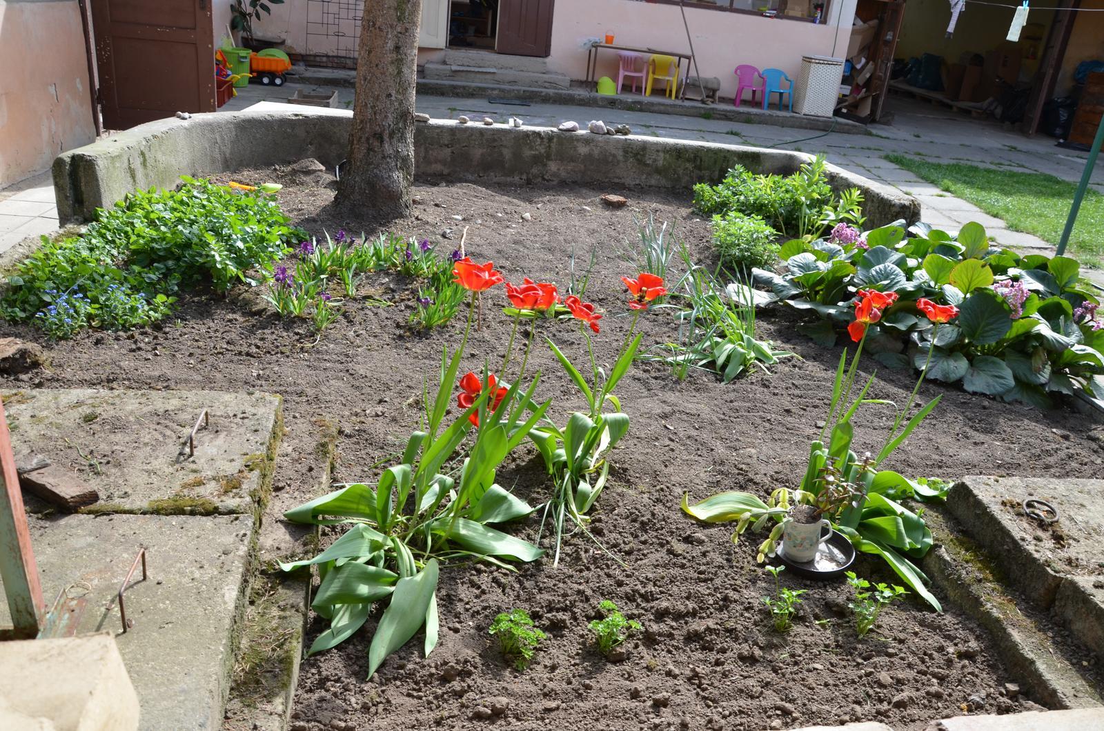 Vysněná zahrada... - nějak mi uniká záměr předchozích majitelů...