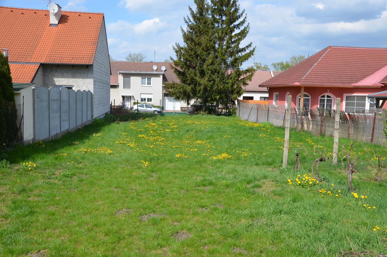 Vysněná zahrada... - máme hodně pampelišek :-D