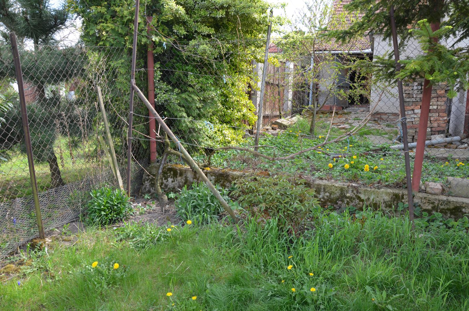 Vysněná zahrada... - dále pokračuje opět réva a pod ní chryzantémy, pivoňky a to poslední nevím co je :-)