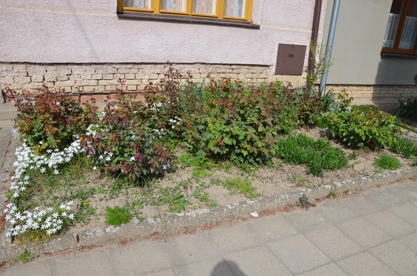 Vysněná zahrada... - předzahrádka....úplně vzadu narcisy a tulipány, vpravo ibišek, uprostřed růže a nějaké okrasné kytičky, suché nebyly nic moc, ale prý kvetou hezky :-D chtěla bych taky trochu změnit....dopředu bych chtěla levanduli