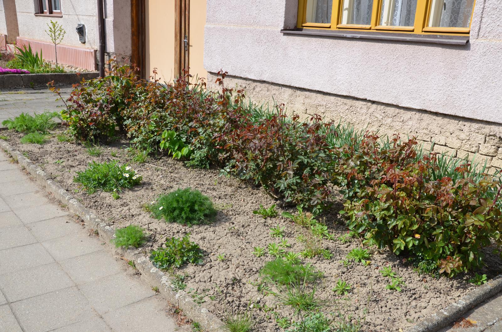 Vysněná zahrada... - druhá polovina předzahrádky