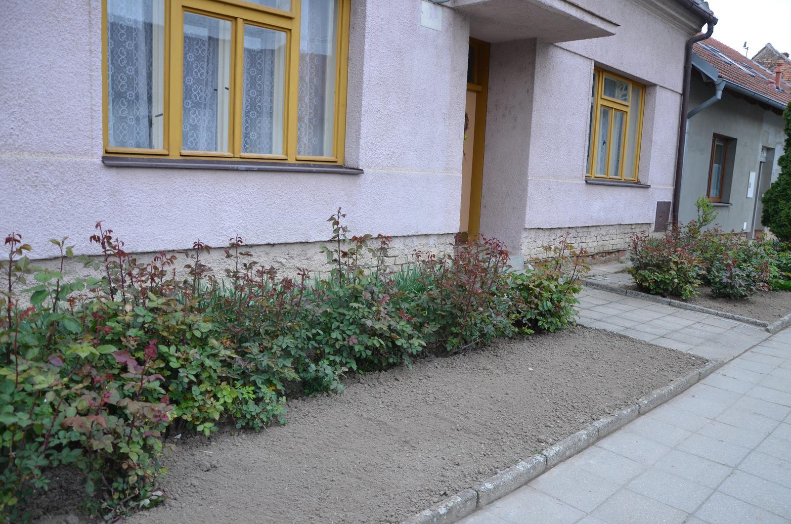 Vysněná zahrada... - Vyčištěná předzahrádka, dopředu bych chtěla spoooustu levandule :-)