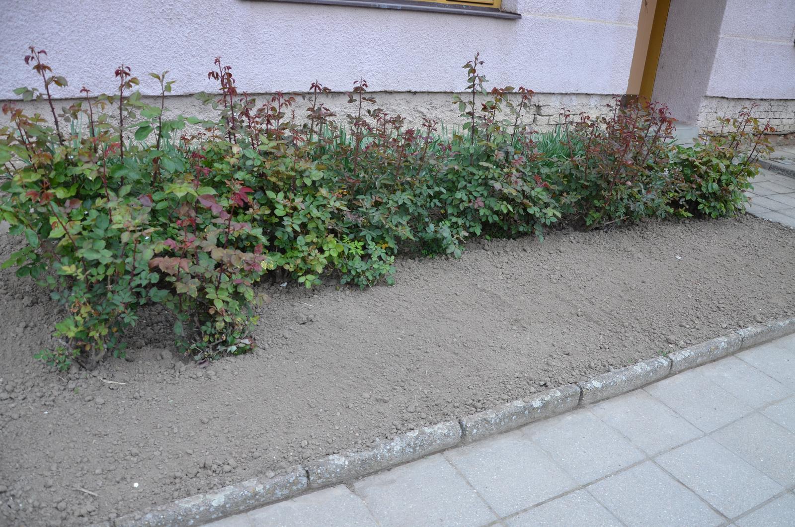 Vysněná zahrada... - Obrázek č. 34