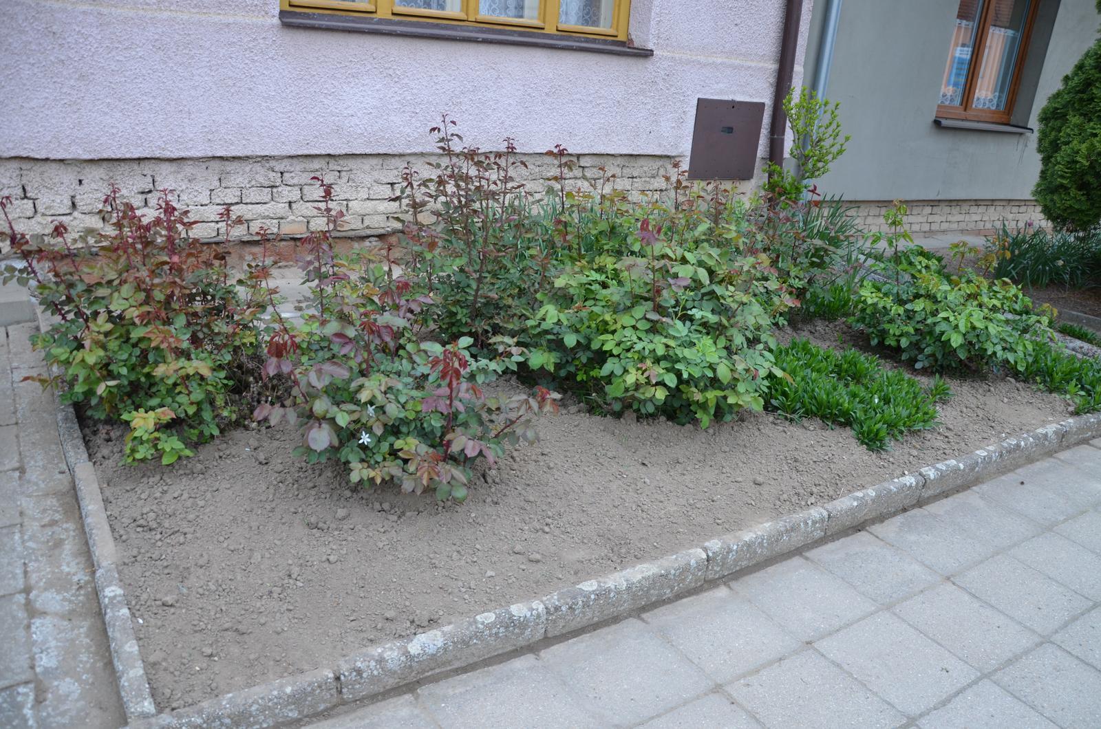 Vysněná zahrada... - Obrázek č. 35
