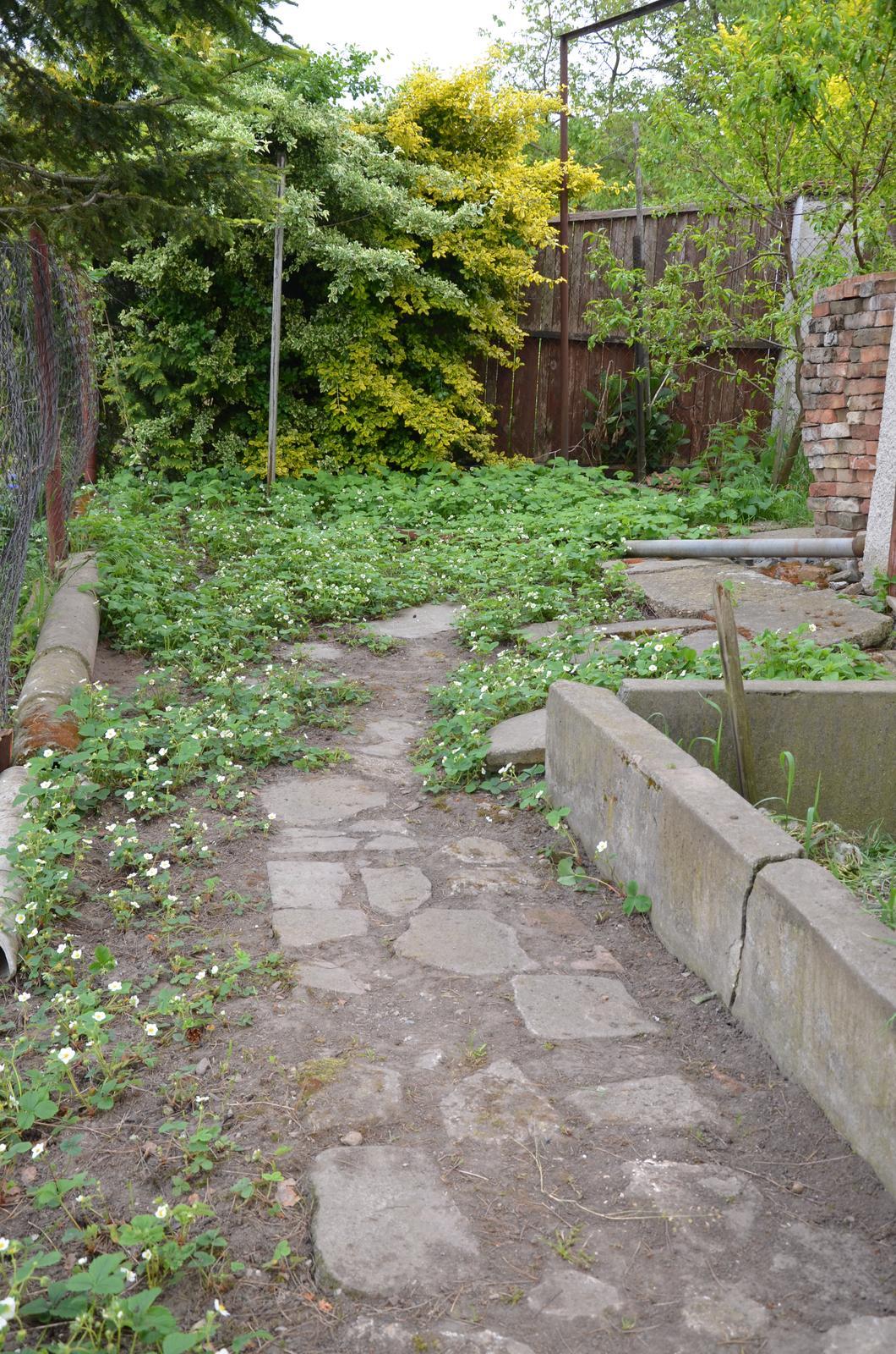 Vysněná zahrada... - Vyčištěná cestička a jahody :-)