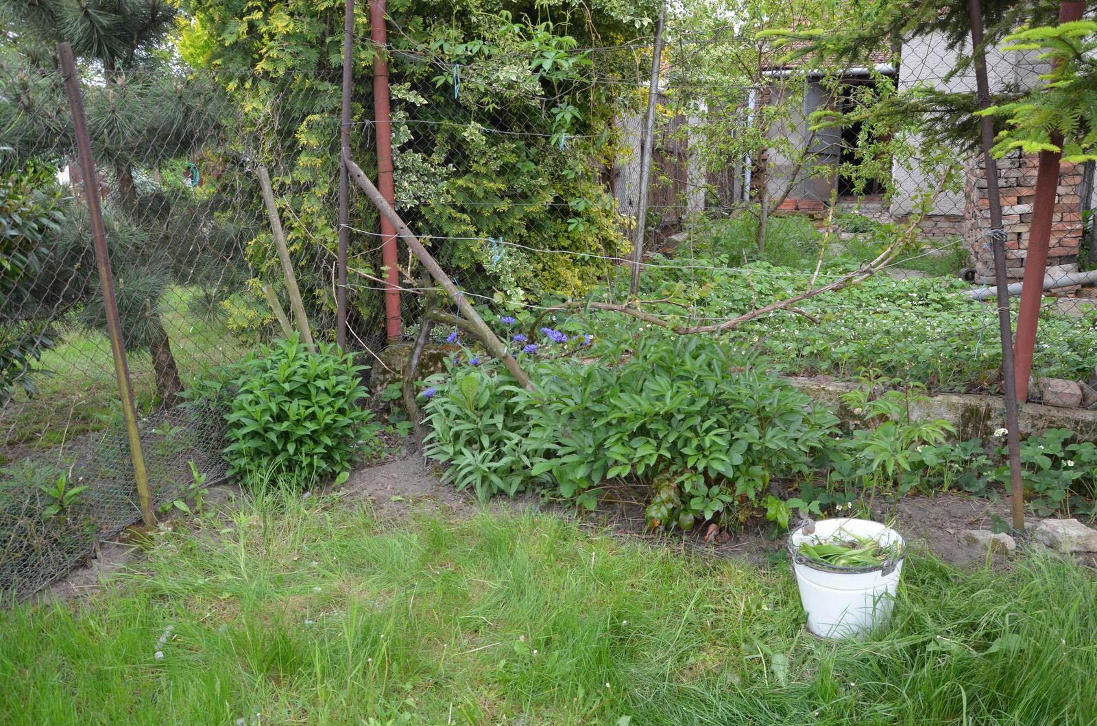 Vysněná zahrada... - Obrázek č. 39