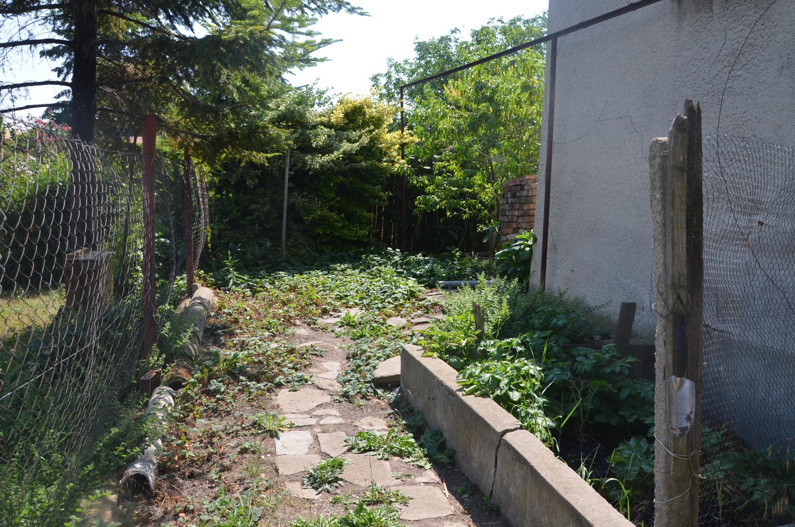 Vysněná zahrada... - jahodiště v červenci...už je rozhodnuto, jahody půjdou pryč, za vinohradem už čeká nový jahodový záhon :-) Co dát sem??? nějaké tipy? vinný sklep cloní z jihu