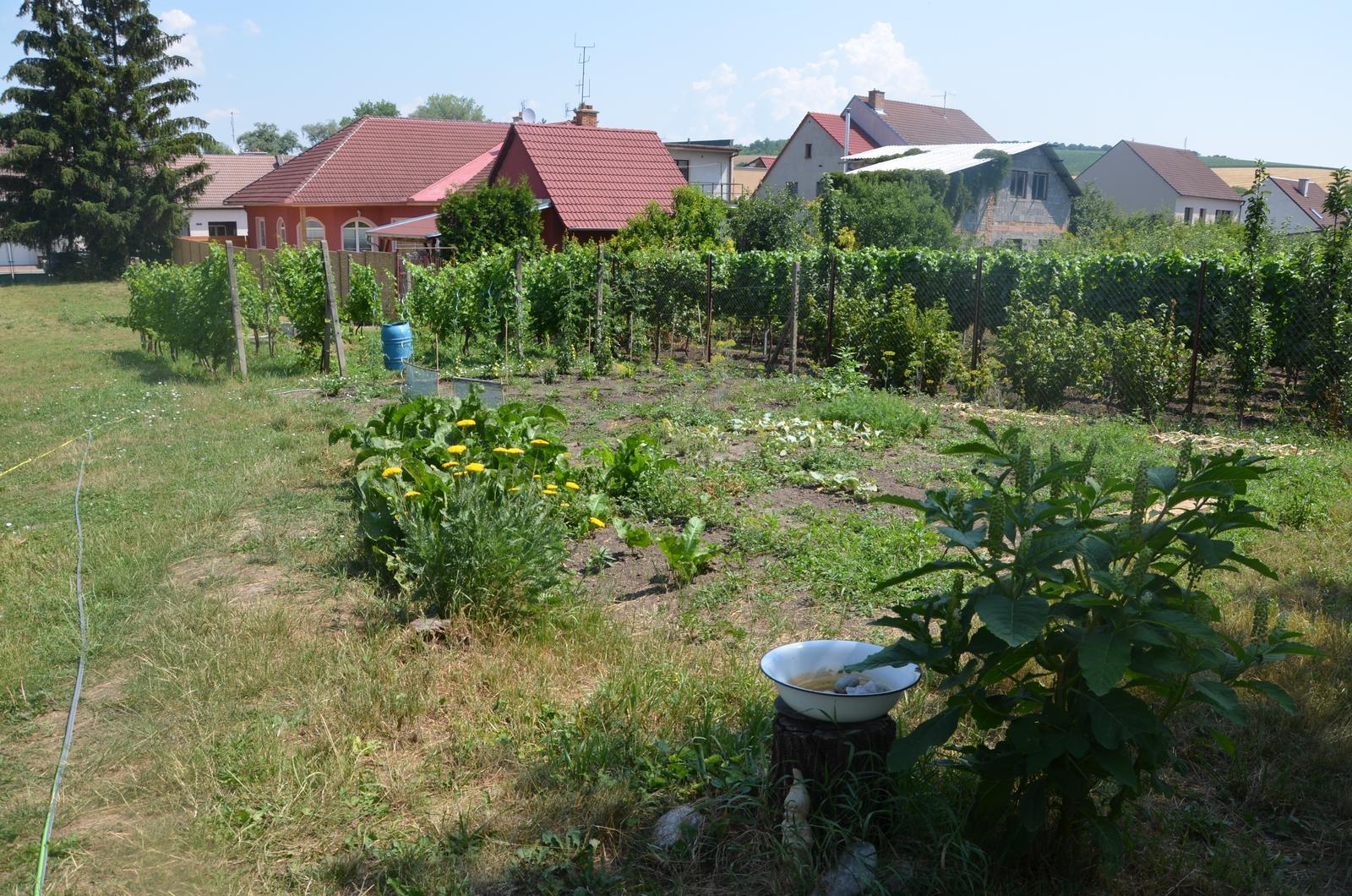 Vysněná zahrada... - Obrázek č. 59