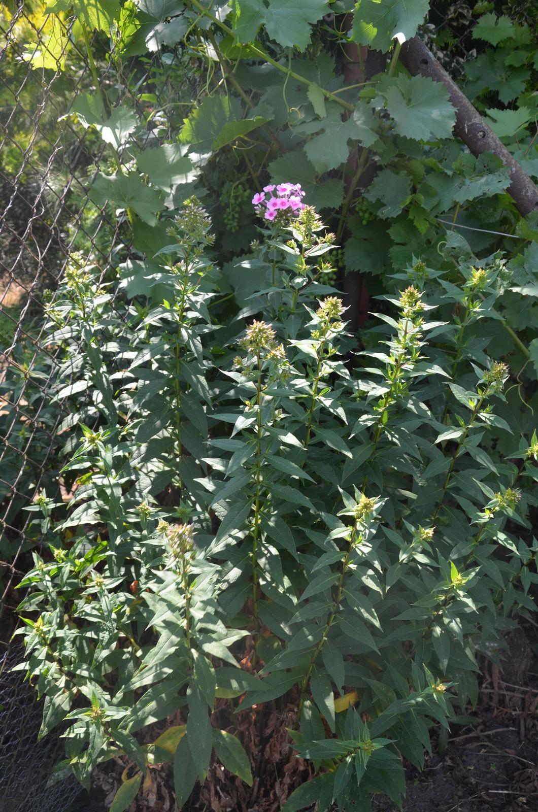 Vysněná zahrada... - co je to?