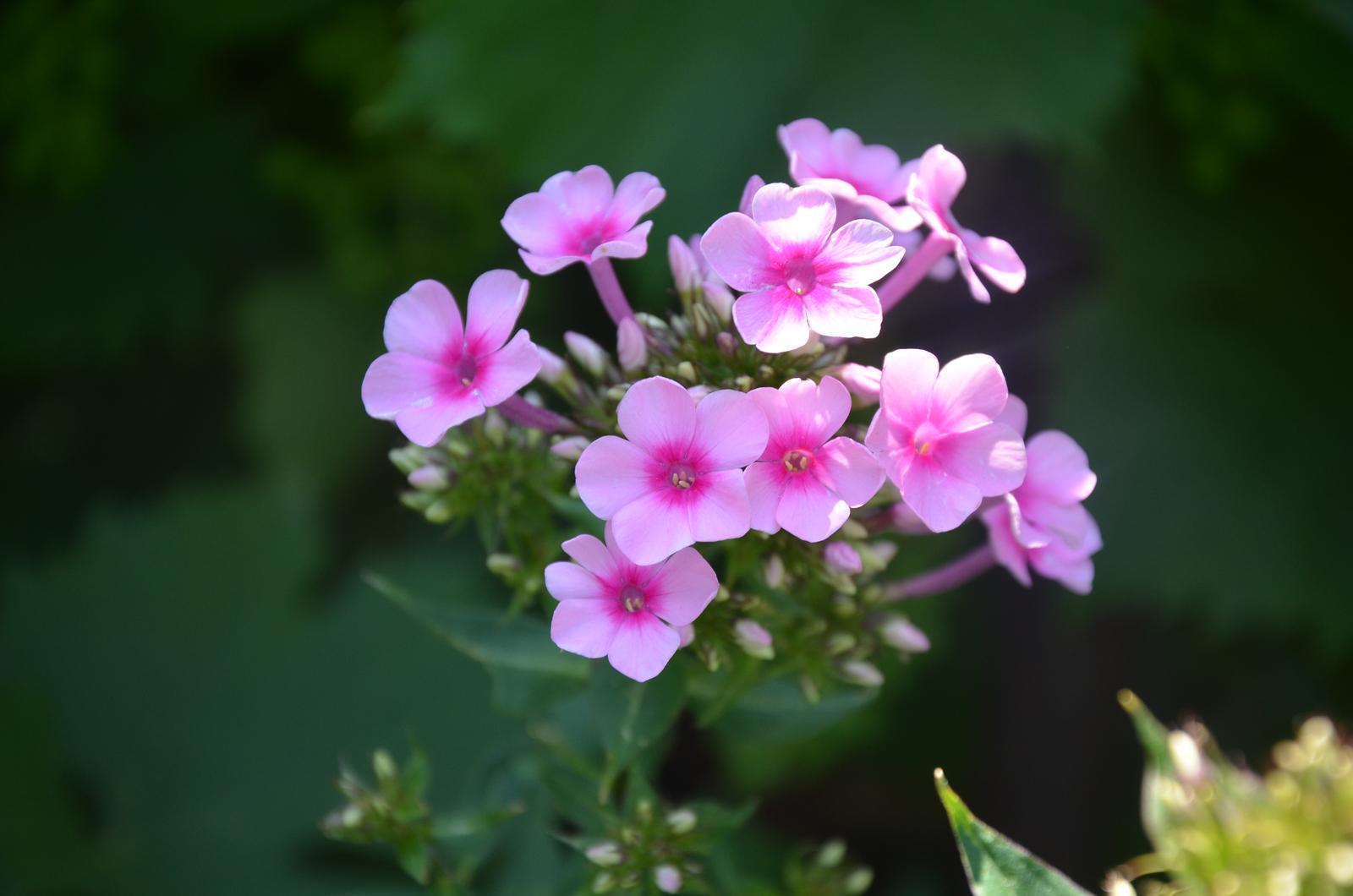 Vysněná zahrada... - Obrázek č. 63