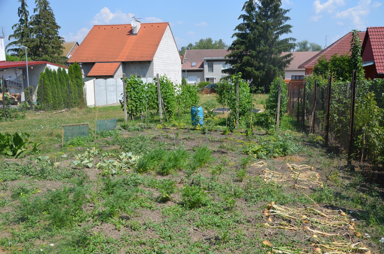 Vysněná zahrada... - zeleninová změť protkaná plevelem...