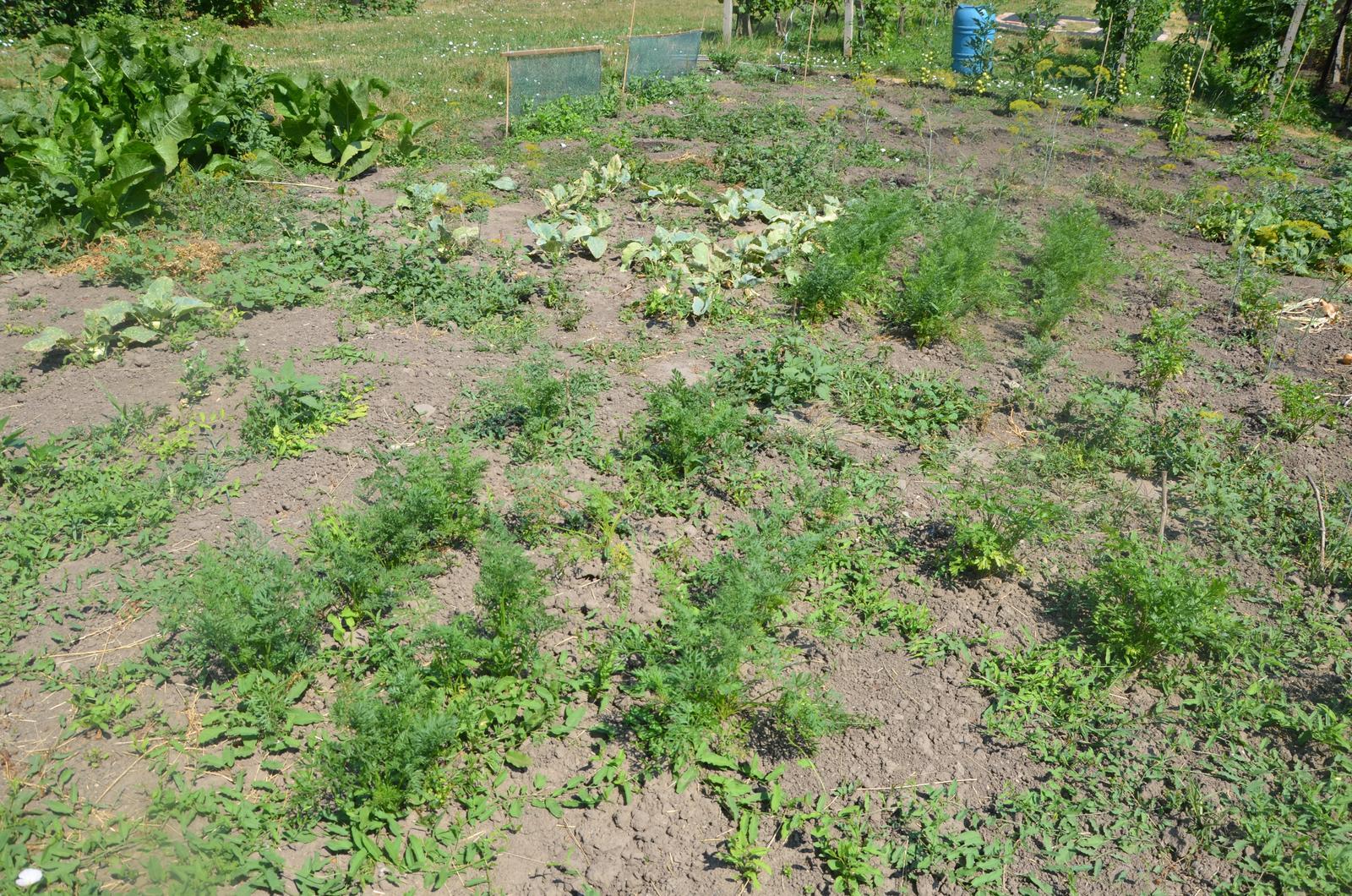 Vysněná zahrada... - Obrázek č. 65