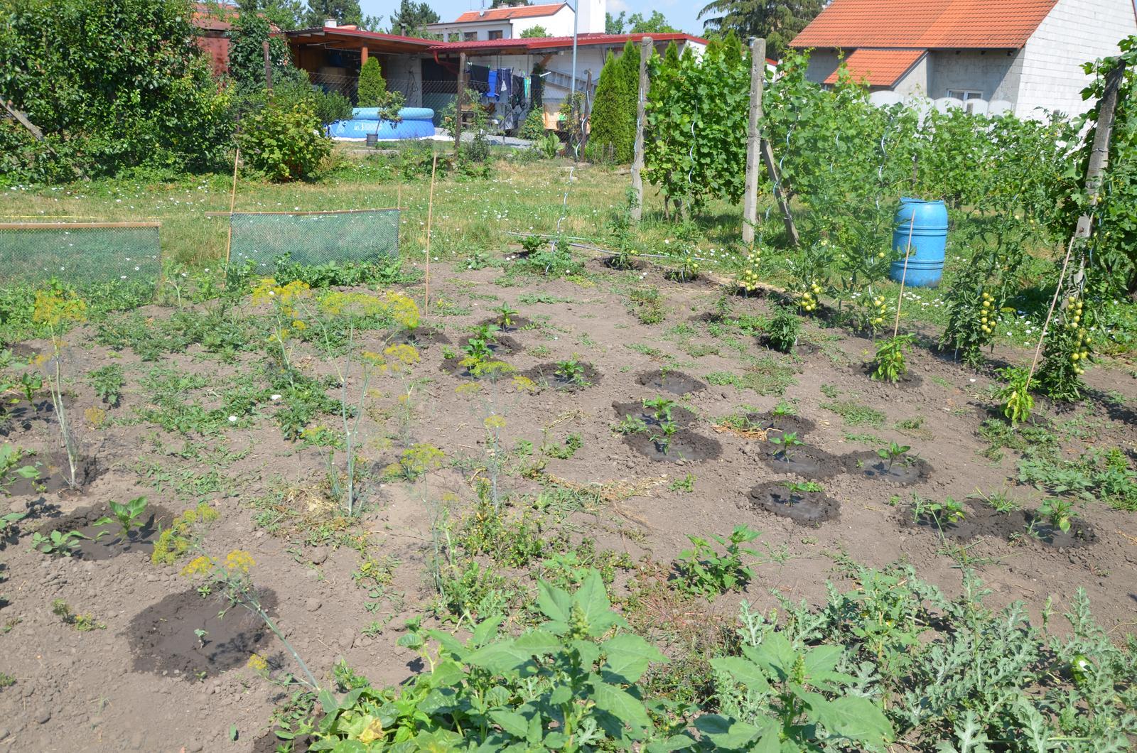 Vysněná zahrada... - Obrázek č. 67