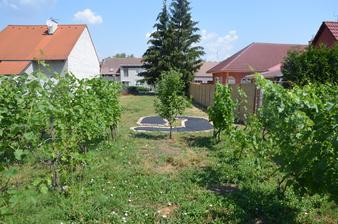 pohled od modrého sudu středem vinohradu, přes jablůňku, na nový jahodový záhon