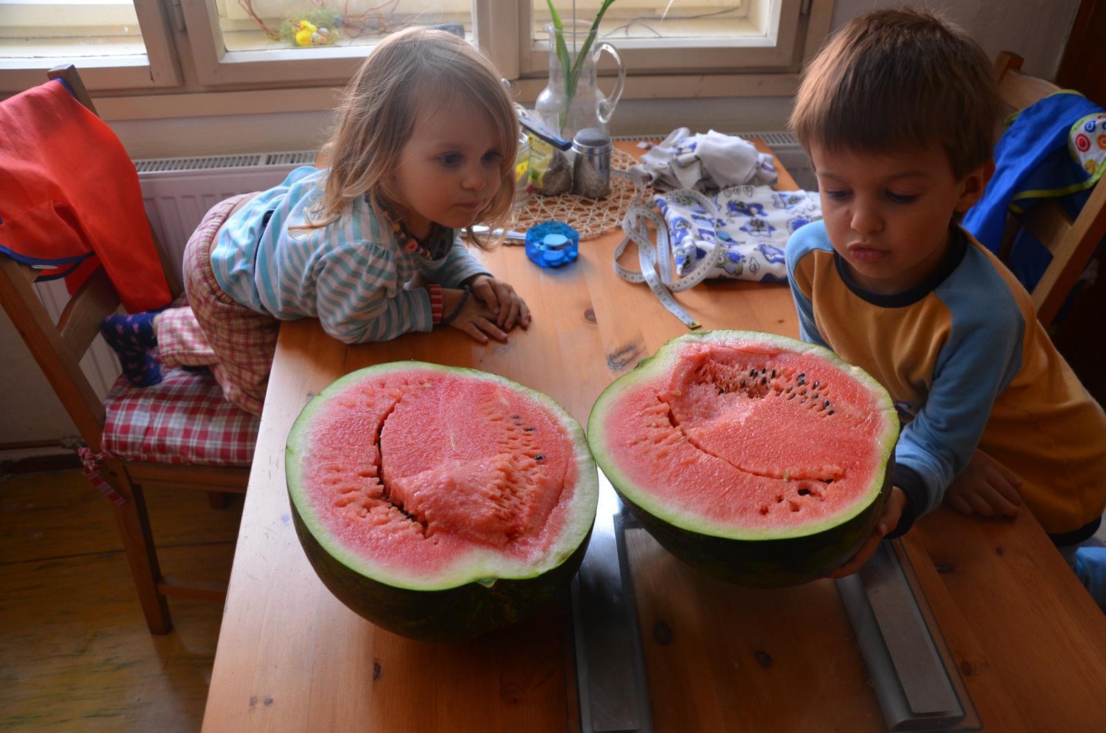 Vysněná zahrada... - Náš meloun!