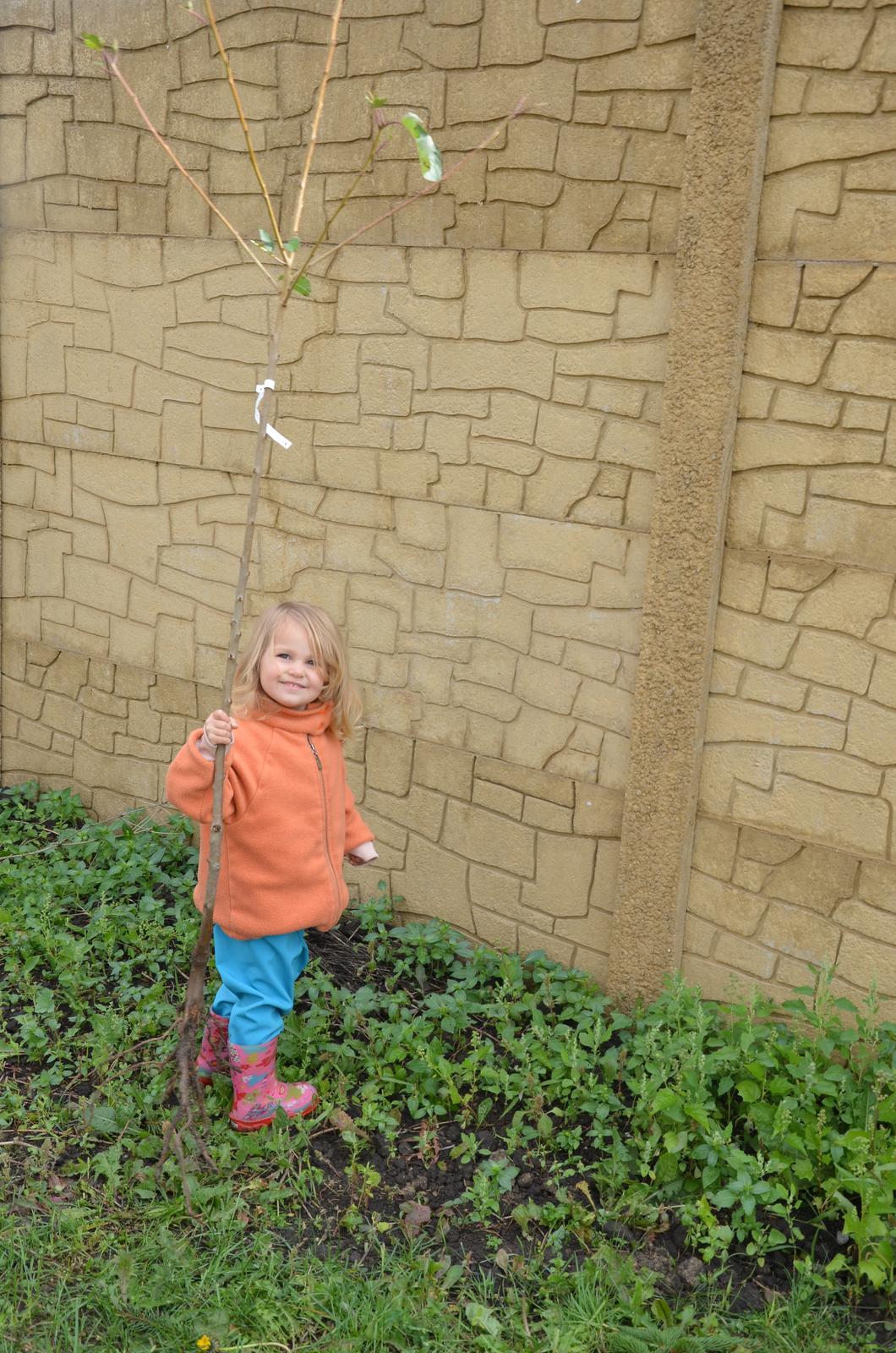 Vysněná zahrada... - 18.10.2015 sadíme ovocné stromy:-)