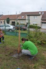 Zasadili jsme jabloň, hrušeň, švestku, meruňku, třešeň, dvě lísky, angrešt a dva rybízy :-) Pokračování na jaře:-D