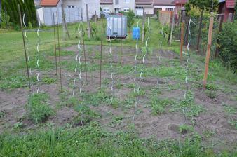 Vedle i letos stále zelenina....nějak jsme ty záhony dole nestihli:-)