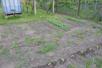 První nádrž v zahradě, ještě máme další tři.....tušíme, že s vodou to bude čím dál tím horší:-(