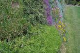 Zelený oporný múr po výseve trávy a sadení skalničiek. Marianka 2013