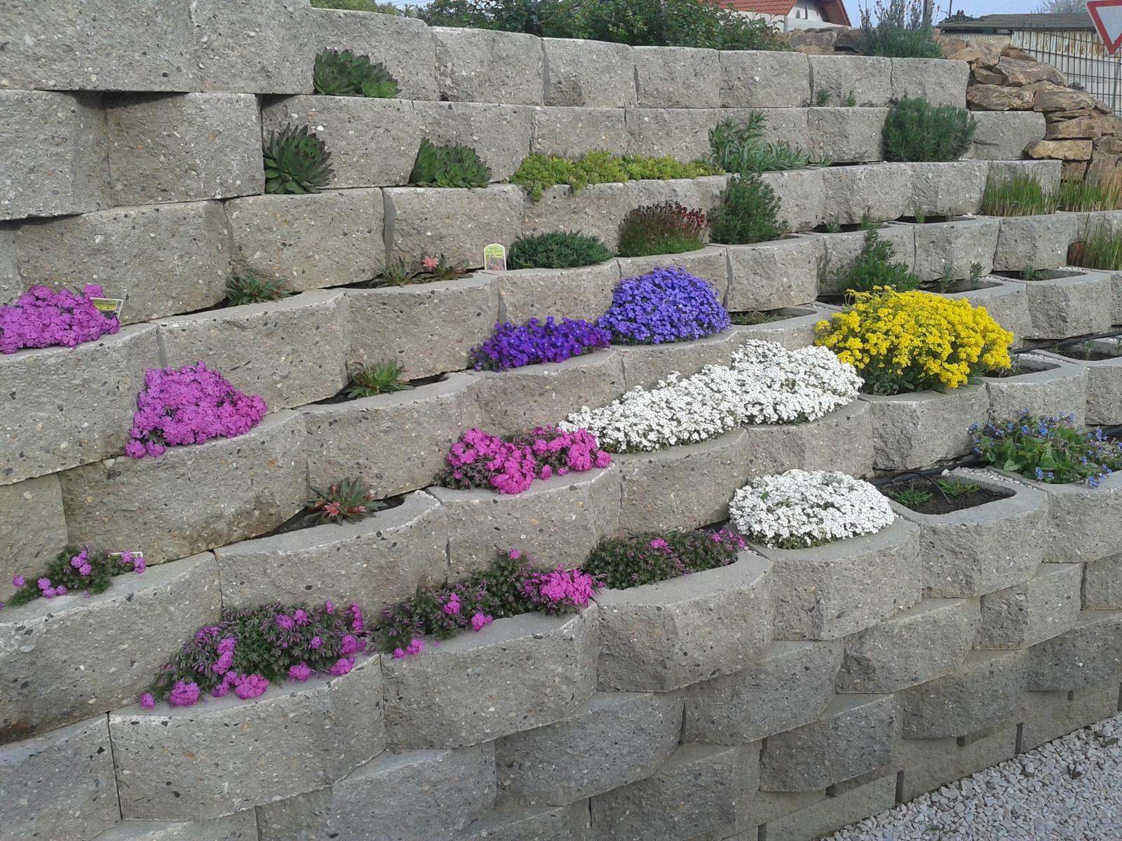 07 Vegetačný oporný múr sa na jar prebúdza ( rozšírené 19.6.2020 ) - 2014 - prvá neskoršia jar po dokončení