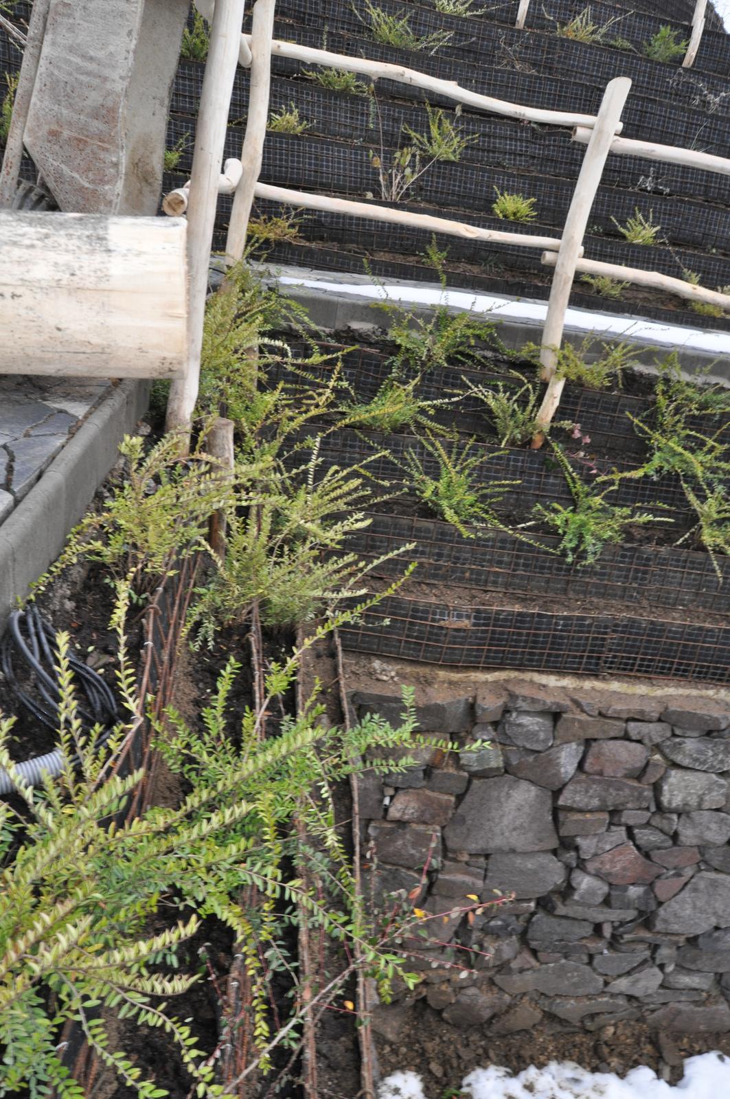 12. GreenSteel - vegetačný strmý svah ( doplnené 12.6.2020 ) - 2019_12 Detail s výsadbou