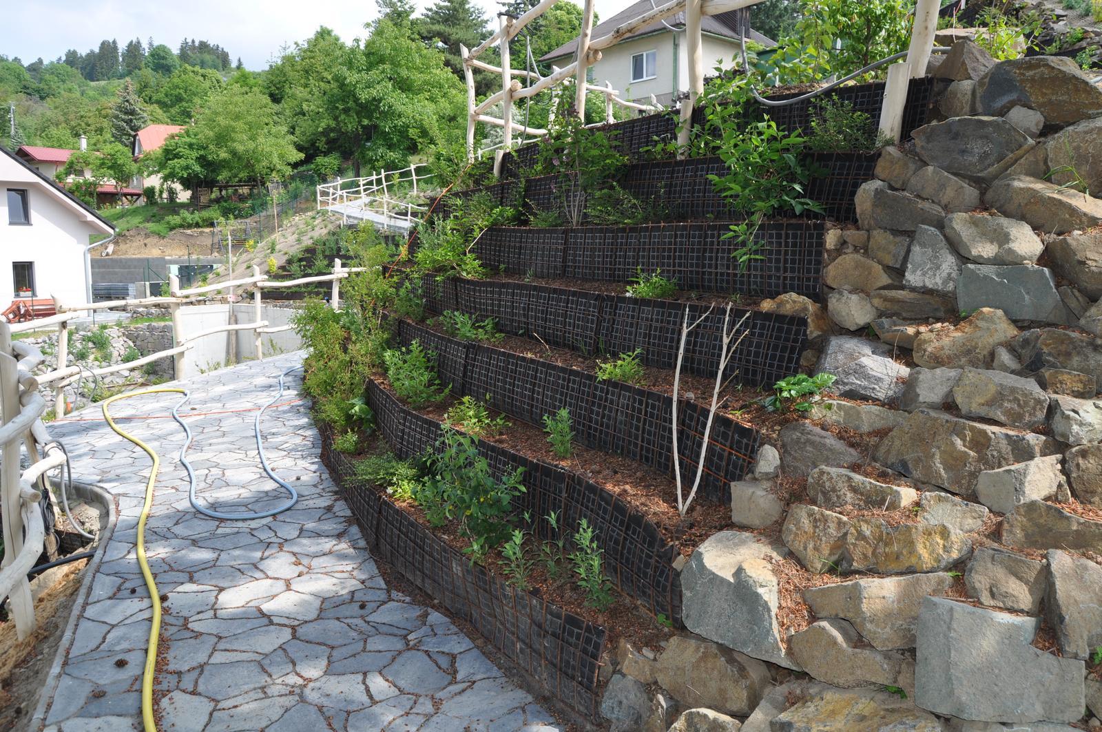 12. GreenSteel - vegetačný strmý svah ( doplnené 12.6.2020 ) - 2020 06 Vegetácia sa už rozrastá