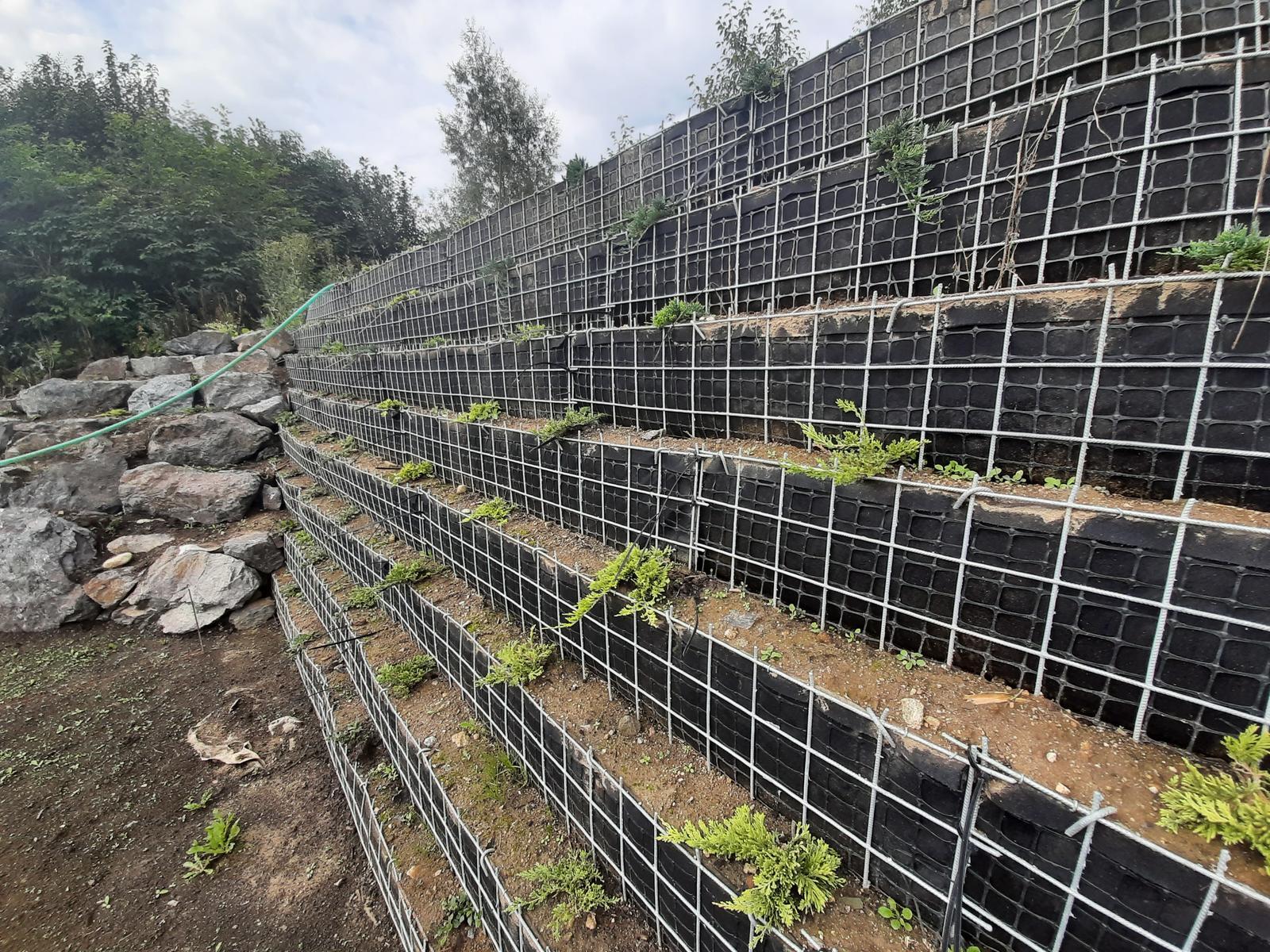 Problematický pozemok ( doplnené 21.8.2020 ) - 2020 08 Tesne po výsadbe zeleného oporného múru.