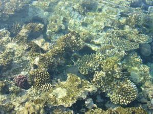 Pomorský život v koraloch.