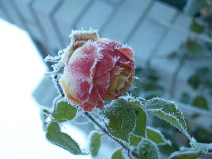 Zahrada 2011 - Obrázek č. 2