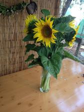 Týžden v predstihu mi moj priniesol slnečnice ževraj len tak z lásky :)