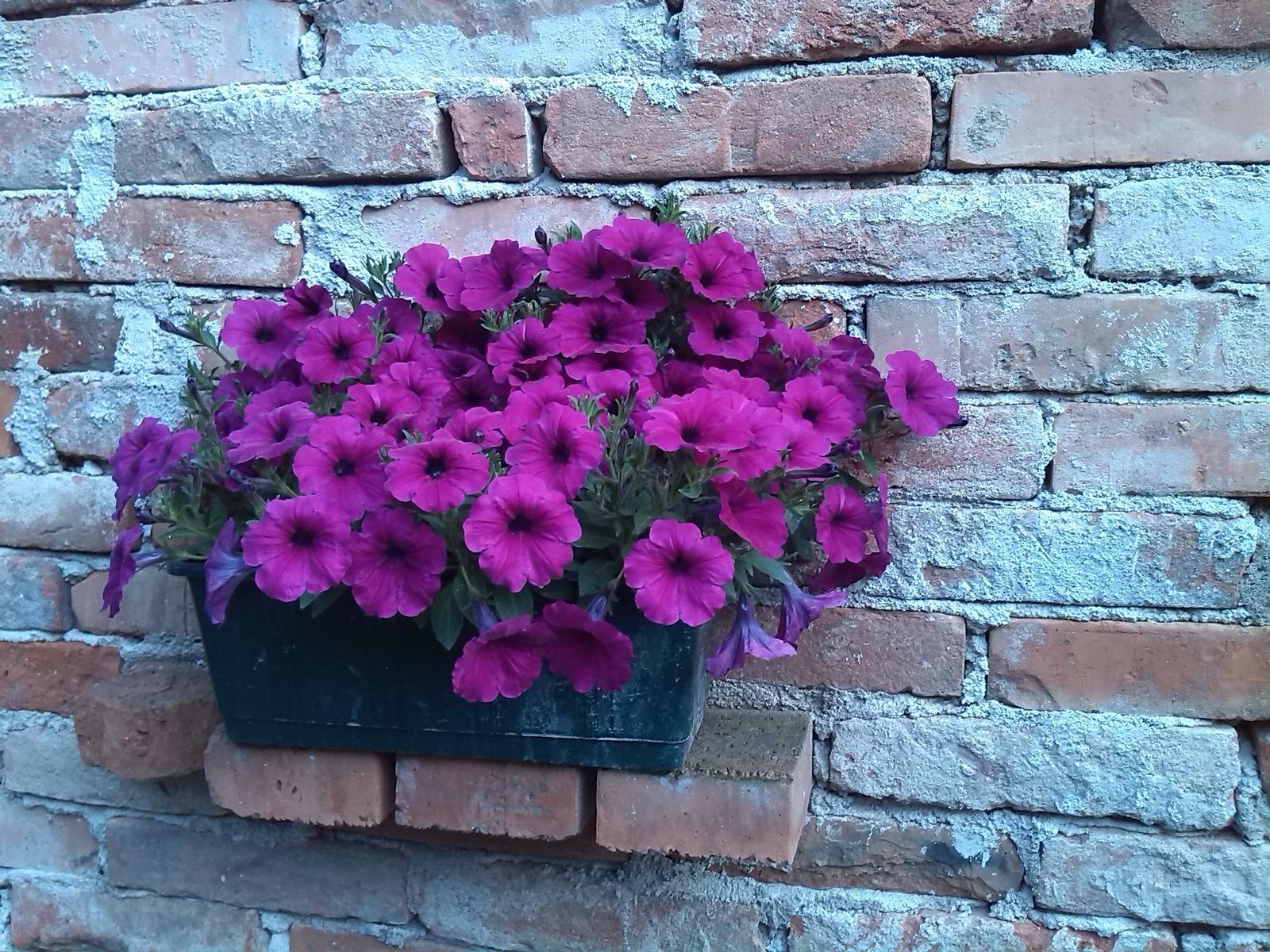 Náš domeček - teď už minulost... - ... už kvetou :)