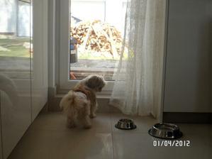 Bejby nebude sedieť v kúte. bejby musí vidieť von :) každé ráno musíme odhrnúť záclonu aby bol výhlad inak je zle :)