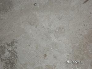 otlačok niektorej našej štvornohej hviezdy na pokrstenie podlahy