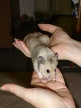 Nejmenší člen naší budoucí rodiny - jmenuje se Šmudlíček :-)