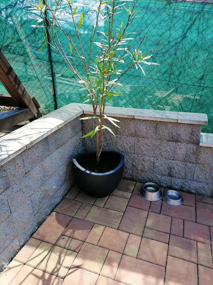 Naše podkroví + zahrada - Obrázek č. 53