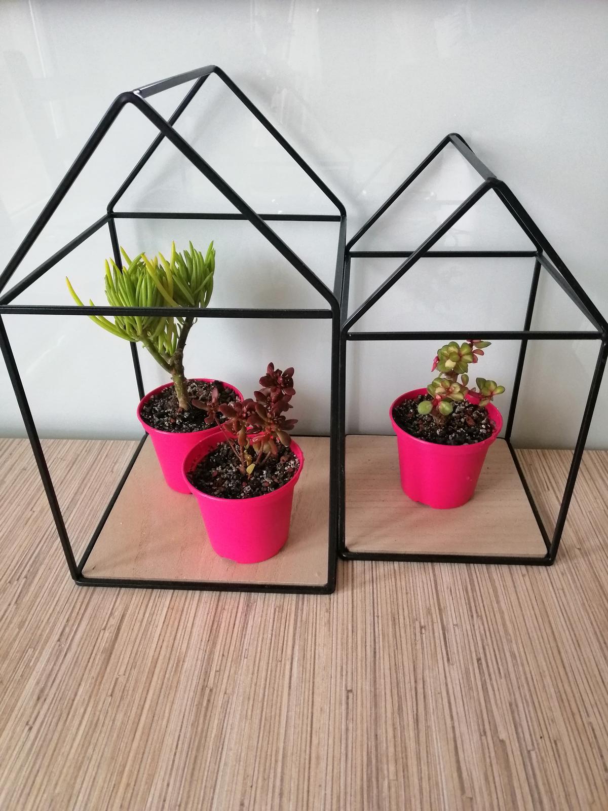Naše podkroví + zahrada - V dočasných květináčcích....