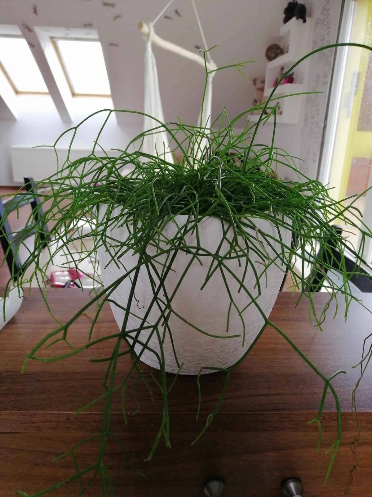 Naše podkroví + zahrada - To je tak když si jdete do zahradnictví koupit pouze substrát na sukulenty....