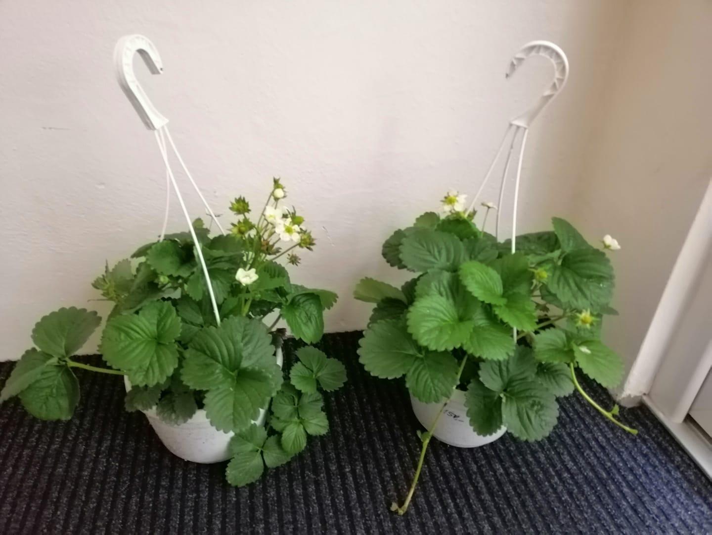 Naše podkroví + zahrada - Ať mají děti co zobat....