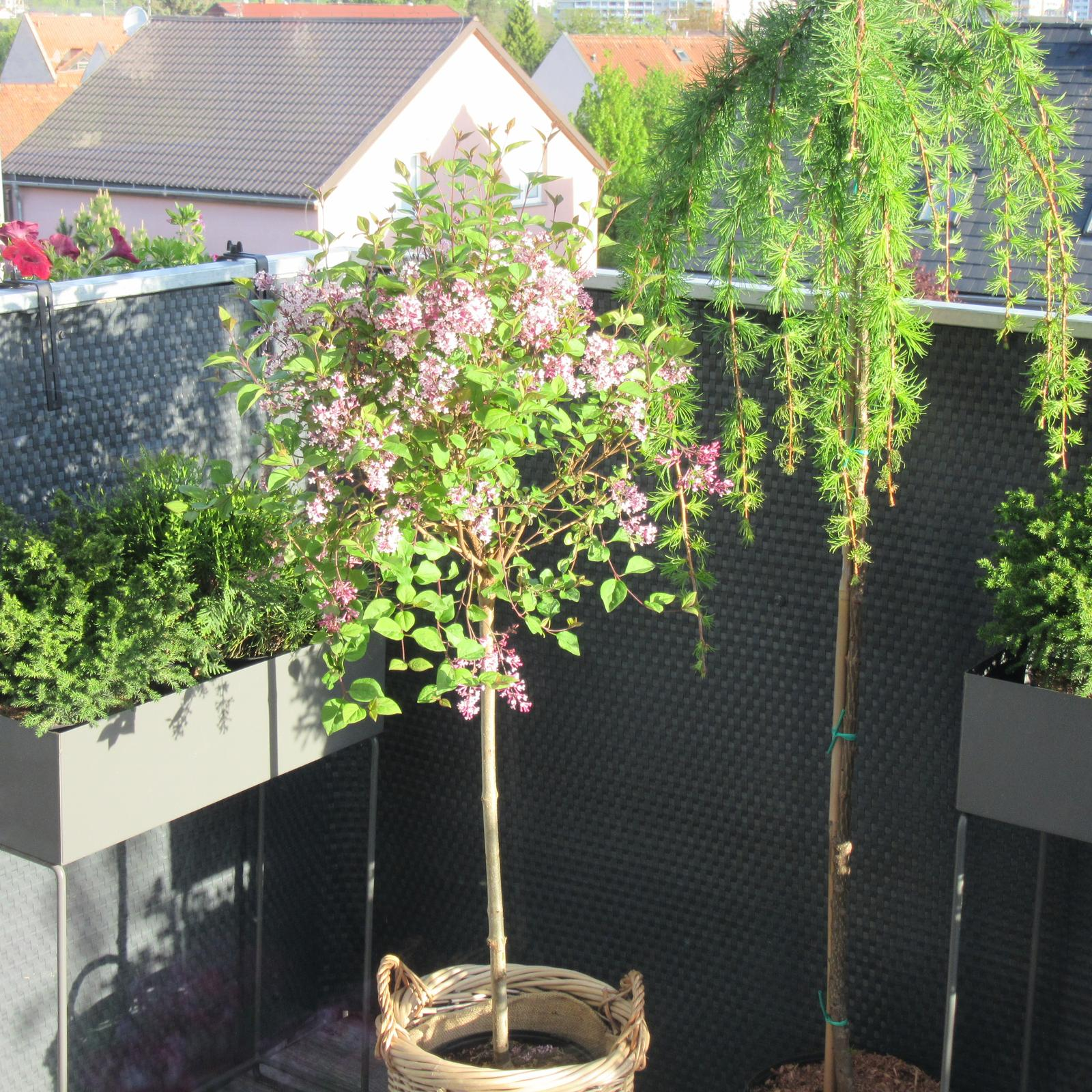 První rok bydlení - 2020 - Nové přírůstky na terase