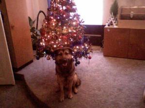 náš bafan před stromečkem a naše první vánoce jako manželé
