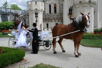 HL - Omlouváme se za krádež cizího koně :-)