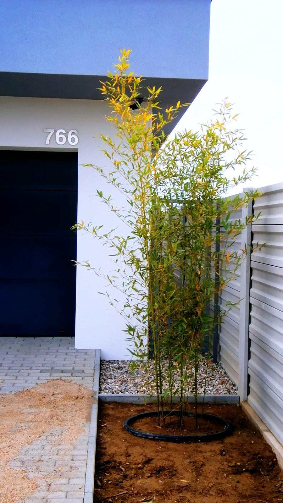 Modern Garden Linear324 - naša prímorská - Obrázok č. 8