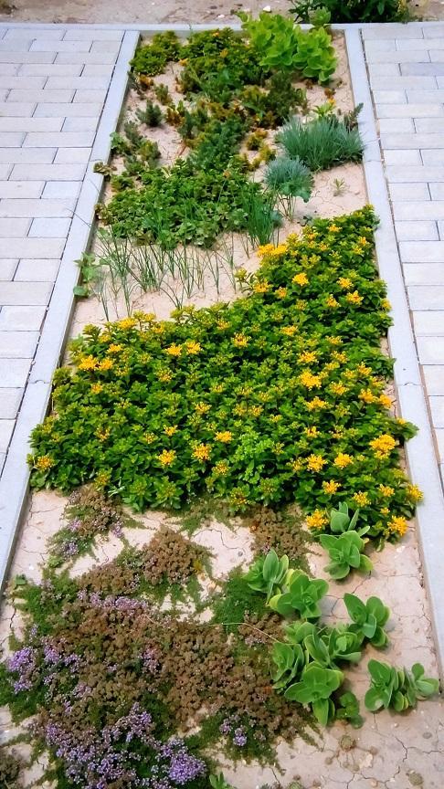 Modern Garden Linear324 - naša prímorská - takto rozrastene cca po 3,5 mesiaci