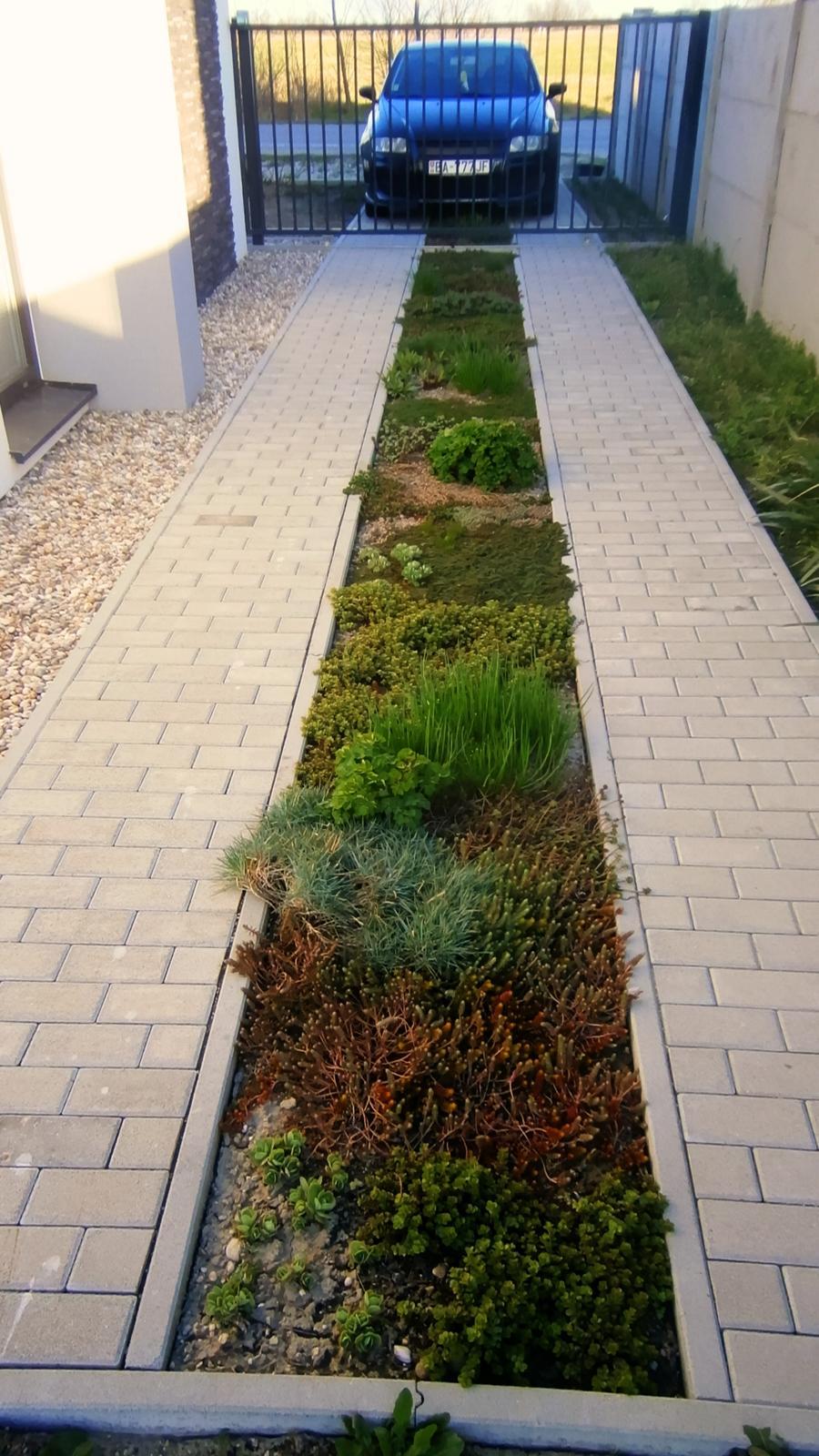 Modern Garden Linear324 - naša prímorská - stredovy pas prerasta skalnickami presne podla mojich predstav :)